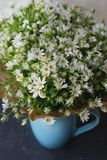 Daisy Camomile Fowers in blue Cup Blue Gray Background. Flower Bouquet Arrangement composition gift Greeting Card. Daisy Camomile Fowers in blue Cup Blue Gray Royalty Free Stock Image