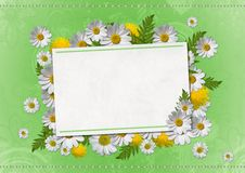 Daisy card Royalty Free Stock Images