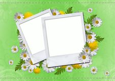 Daisy card Stock Image