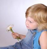 daisy chłopca Obrazy Stock