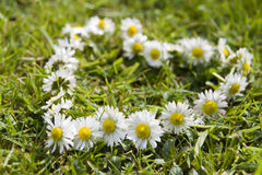 Free Daisy Chain Royalty Free Stock Photos - 5148358