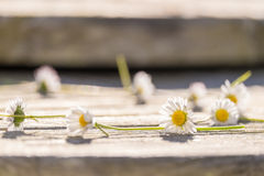 Daisy Chain Immagine Stock