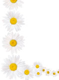 Daisy chain border Stock Images
