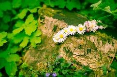 Daisy chain Stock Image