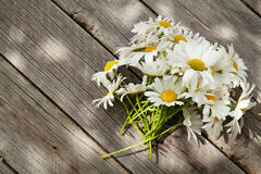 Daisy chamomile flowers on wood Royalty Free Stock Photography