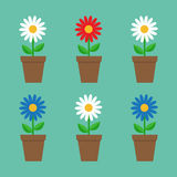 Daisy chamomile in pot. Cute flower plant collection. Love card. Stock Photo
