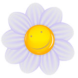 Daisy with a cheery smile isolated. Vector Stock Photo