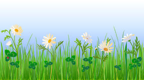 Daisy and Clover Meadow stock photography