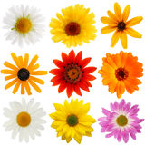 Daisy collection Stock Photo