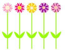 Daisy in color. Flowers for design wrap, boxes or wallpapers. vector, editable Royalty Free Stock Photography