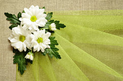 Daisies and organza Stock Photos