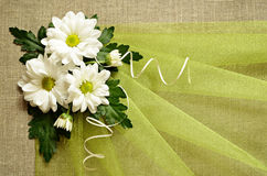Daisies and green organza Royalty Free Stock Photos
