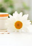 Daisy, cream jar, cosmetics. Daisy and a cream jar on green blurred background Royalty Free Stock Image