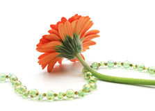 Daisy with crystal beaded jewelry. Red orange daisy flower  on white with green and gold vermeil crystal beaded necklace Royalty Free Stock Image
