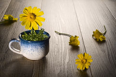 Daisy on cup Stock Images