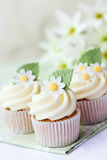 Daisy cupcakes Royalty Free Stock Photos