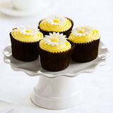 Daisy cupcakes Stock Photography