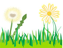 Daisy and dandelion. Garden Stock Image