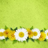 Daisy and dandelion flowers on green paper background Royalty Free Stock Photography