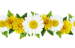Daisy and dandelion flowers Royalty Free Stock Images