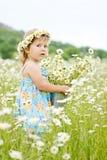Daisy day Stock Photos