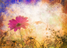 Daisy, de bloemen van de de lentezonsopgang Stock Foto's