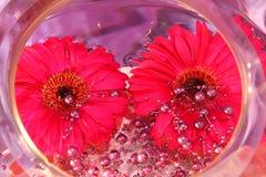 Daisy decoration Royalty Free Stock Photo