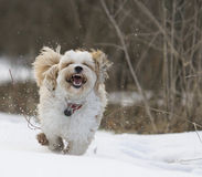 Daisy Dog royalty-vrije stock afbeeldingen