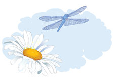 Daisy and dragonfly Royalty Free Stock Image