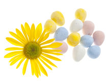 Daisy with Easter Candies Royalty Free Stock Images