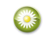 Daisy eco button. A button or logotype kind of picture with daisy on a green symbolizes purity and ecology of technology Royalty Free Stock Image