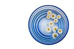 Daisy in een vaas Royalty-vrije Stock Afbeeldingen