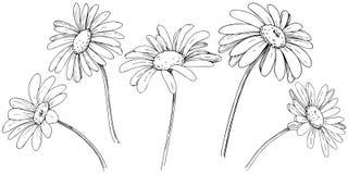 Daisy in een vector geïsoleerde stijl vector illustratie