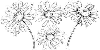 Daisy in een vector geïsoleerde stijl stock illustratie