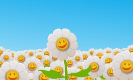 Daisy field. Illustration of a field of lots of happy Daisy flowers Royalty Free Stock Image