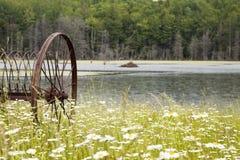 Daisy Field con el equipamiento agrícola antiguo Foto de archivo libre de regalías