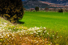 Daisy Field In ein Tag des Frühlinges Lizenzfreie Stockbilder