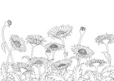 Daisy field outline sketch hand drawing on white background. For wallpaper Royalty Free Stock Photos