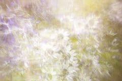 Daisy Floral Background abstraite Photographie stock libre de droits
