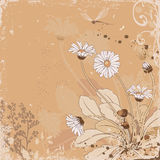 Daisy. Vector floral background with daisy flowers royalty free illustration