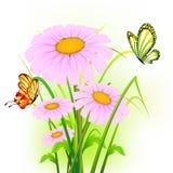 Daisy Flower stock illustration