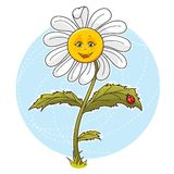 Daisy flower. Cartoon illustration of beautiful cute Daisy flower Royalty Free Stock Photos