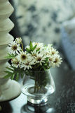 Daisy flower. White daisy flower in glass Royalty Free Stock Photography