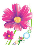 Daisy flower. This daisy flower ideas for creative graphic shapes. Colors and stripes. Graphic design is a natural color made from the colorful stock illustration