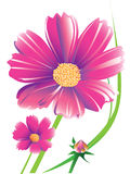 Daisy flower. This daisy flower ideas for creative graphic shapes. Colors and stripes. Graphic design is a natural color made from the colorful stripes Stock Photos