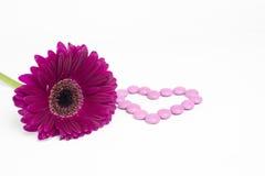 Daisy Flower imagen de archivo libre de regalías