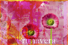 Daisy flower. Digital created illustration with daisy flower Stock Photos
