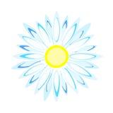 Daisy Flower Immagini Stock Libere da Diritti