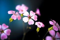 Daisy flower against blue sky,Shallow Dof. Floral background Stock Photo