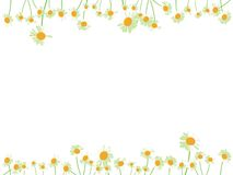 Daisy flower background Royalty Free Stock Image